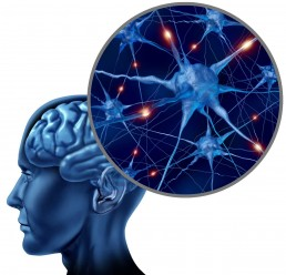The Life Upgrades - Neuroplasticity