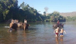 The Life Upgrades - Elephant Trekking
